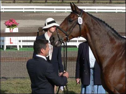 Comment s'appelait le cheval monté par Jean Teulère lors des JO de 2004, et qui permit à l'équipe de France d'équitation de remporter une médaille d'or ?