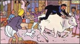 Dans quel album le capitaine Haddock a-t-il des démêlés avec une vache ?