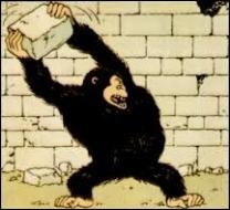 Dans quel album Tintin doit-il affronter un énorme gorille ?
