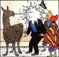Dans quel album le capitaine Haddock fait-il  connaissance  avec un lama ?