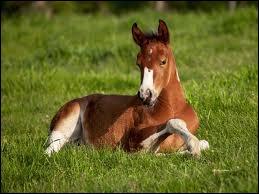 À quoi doit-on penser avant d'embarquer un cheval dans un van ?