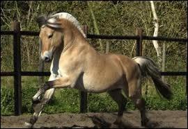 Quelle position le cavalier doit-il adopter pendant la durée du saut ?