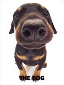 Quelle est la race de ce chien de garde ?
