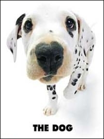 Quelle est la race de ce chien moucheté de noir ?