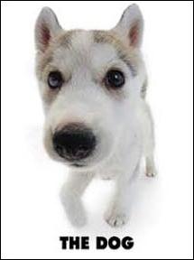 Quelle est la race de ce chien de traîneau ?