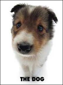 Quelle est la race de ce chien qui semble tout doux et pelucheux ?
