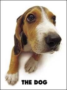 Quelle est la race de ce chien de chasse ?