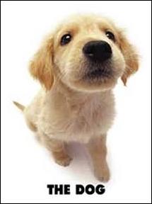Quelle est la race de ce chien très prisé car affectueux ?