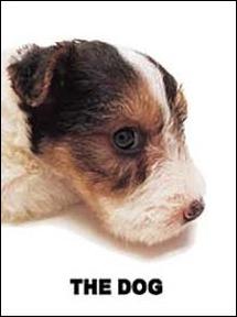 Quelle est la race de ce petit chien ?