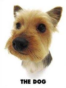 Races de chiens (2)