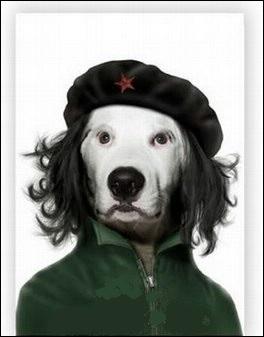 Révolutionnaire marxiste et homme politique d'Amérique latine, Ernesto a été un dirigeant célèbre de la révolution cubaine.
