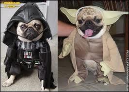 Les chiens n'échappent pas non plus au cosplay. Où est Yoda ?
