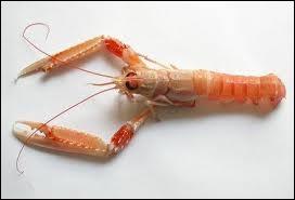Quel est ce crustacé ayant une carapace rouge-brun et pourvu de petites pinces ?