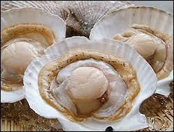 Quel est ce coquillage bivalve dont on consomme  la noix  ?