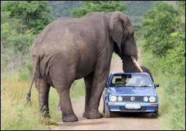 Le Kruger National Park est la plus grande réserve d'animaux d'Afrique du Sud. Il se situe au nord-est du pays. De quel pays borde-t-il la frontière sur 350 km ?