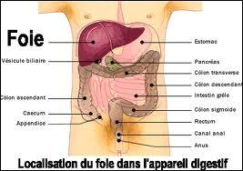 Le foie est un organe qui peut se régénérer automatiquement sans l'intervention d'un régime ou de médicaments.