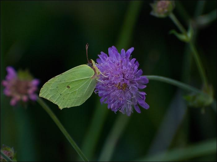 Quizz sortez les antis ches quiz animaux cinema astronomie - Duree de vie papillon de nuit ...