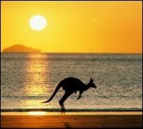 Le pays des kangourous :