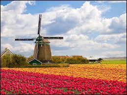 Le pays des tulipes :