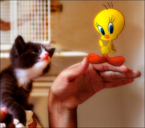Ce chat est moins impressionnant que dans le dessin animé. De qui se moque-t-on ?