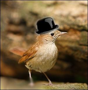 Il chante bien , mais avec un petit accent  british  ... .