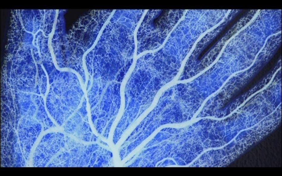 Les vaisseaux sanguins forment un réseau dont la longueur totale atteint :
