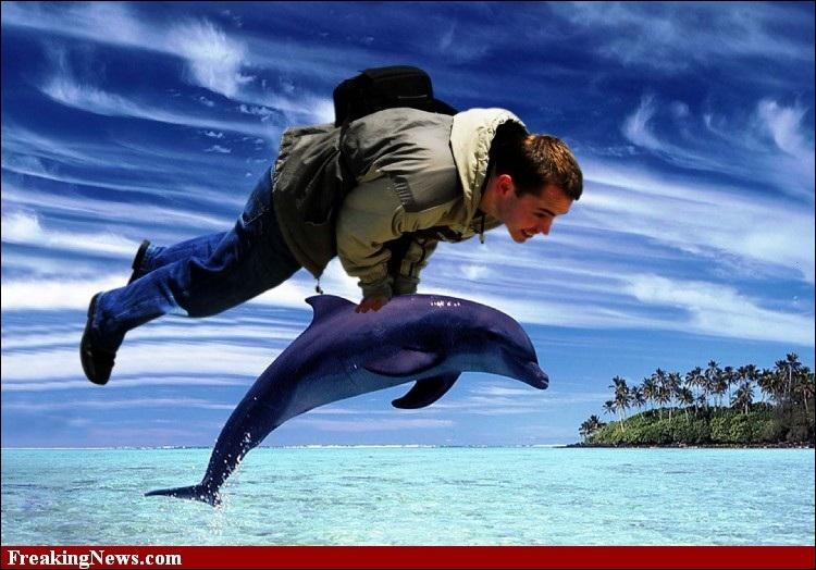 Le dauphin peut mettre en réserve une grande quantité d'oxygène dans ses poumons pour alimenter sa nageoire caudale ultra-puissante. Mais combien de fois plus d'air que l'humain ?