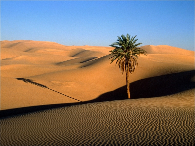 Sous une chaleur torride, dans le désert, entouré de sable et de saletés, vous creusez. Vous cherchez, mais ne trouvez que des vieux os ou autres choses de ce genre. Quel métier exercez-vous ?