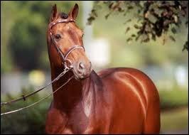 C'est un magnifique cheval d'obstacle : (un peu plus compliqué)...
