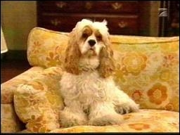 Suite à sa disparition, le premier chien des Bundy se réincarna dans ce mignon petit toutou qui se nomme :