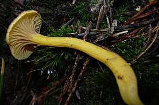 Quel est le nom de ces champignons, tous comestibles ?