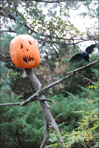 Cette photographie a été faite dans la partie réservée à Halloween du jardin botanique de New-York mais on peut tout à faire reproduire... ?