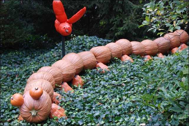 Toujours visible à New-York dans ce jardin, une belle idée que ce chemin de citrouilles qui est... ?