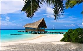 Quelle est l'altitude maximale des îles Maldives ?