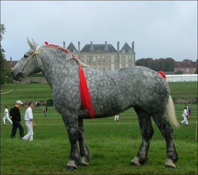 Connaissez-vous ce cheval de trait ?
