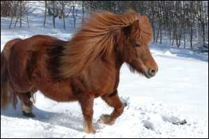 Et ce poney ?