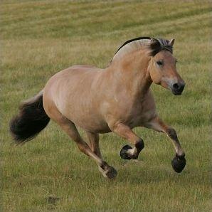 Les principales races de chevaux