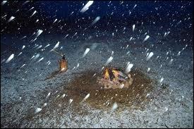 Qui chantait  Ce soir il neige jusqu'en enfer, il neige à fendre des cailloux ...   dans sa chanson  le feu à la peau   ?