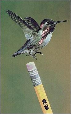 Le colibri est le seul oiseau capable de...