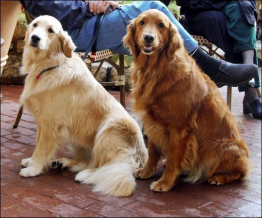 Pourquoi y a-t-il une différence de couleur entre ces deux chiens ?