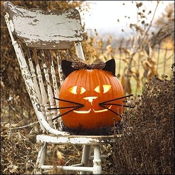 Voici encore un autre modèle de chat, dont la réussite se trouve notamment... ?