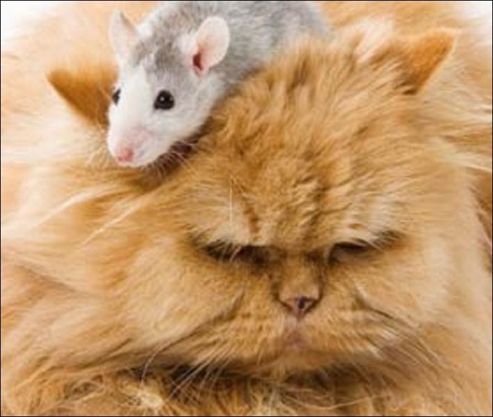 Dans une pièce carrée, il y a quatre coins. Dans chaque coin, un chat. Devant chaque chat, trois chats. Et sur la tête de chaque chat, une souris. Sachant que les chats ne dévorent pas les souris, combien y a-t-il d'animaux au minimum dans la pièce ?