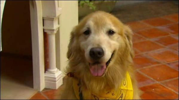 À quel drama japonais ce chien appartient-il ?