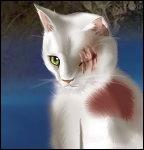Cette chatte qui a subi des griffures horribles n'est autre que...