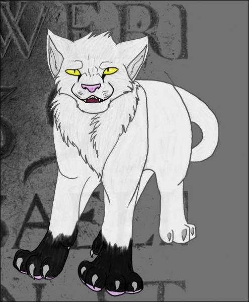 Comment s'appelle ce chat ?