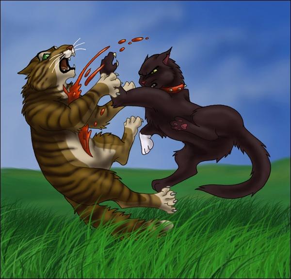 Cet acte sanglant est constitué de 2 redoutables chats qui sont tous les deux chefs de clans :