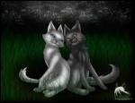 Quel est ce couple de chats de clans différents ?