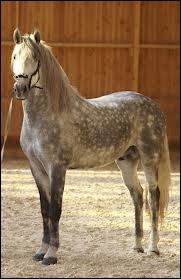 Quel est le nom du cheval adulte non castré ?