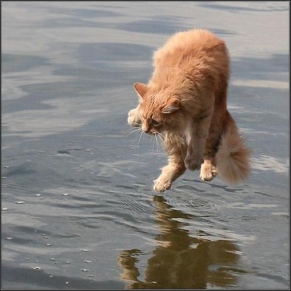 Jésus, le chat et Narcisse : trouvez la fausse proposition...