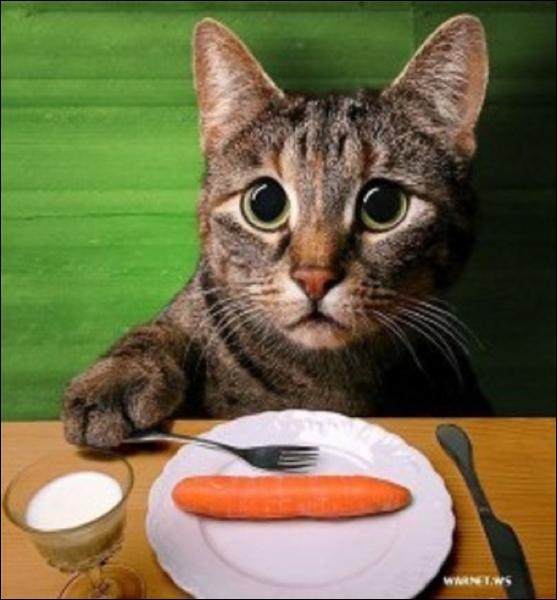 Le chat, la fourchette et la carotte : trouvez la vraie proposition...